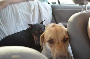 Doggie Paradise: A Lake Day for Nala andLady